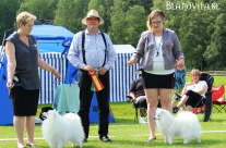 Japanese Spitz: Hiro Best Of Breed, Saga Best Opposite Sex