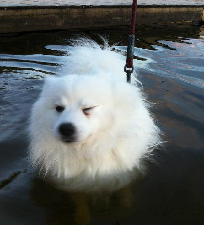 Hiros första simtur