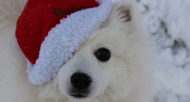 God Jul önskar tomteGenji