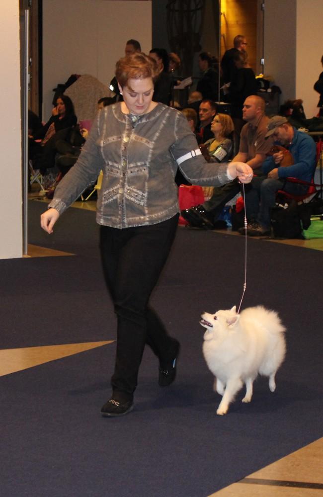 Aura går snyggt i ringen – My Dog 2014