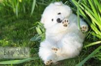 Lilly i vårgräset