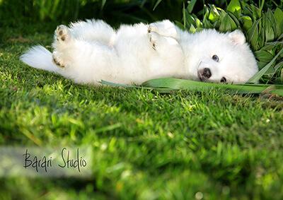 Lilly slappar i gräset