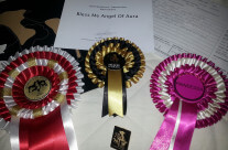 (Svenska) World Dog Show 2014