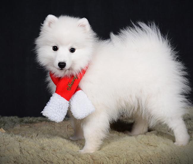 God Jul önskar Saga!