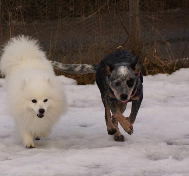 Hiro springer ikapp med Emmi