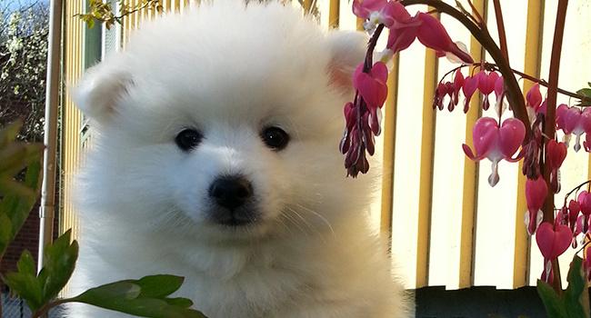 Springtime puppy