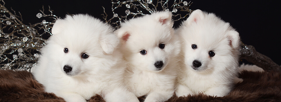 God Jul önskar Charlie, Alaska och Ninya