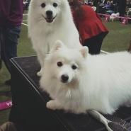 Världens bästa hundar!